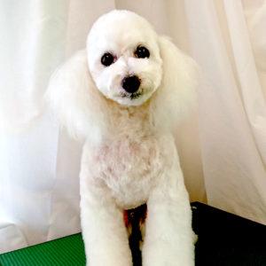 DogSalonフルールGalleryページ