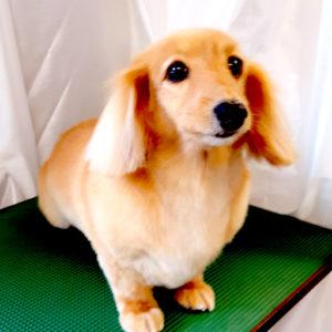 DogSalonフルールギャラリーの画像